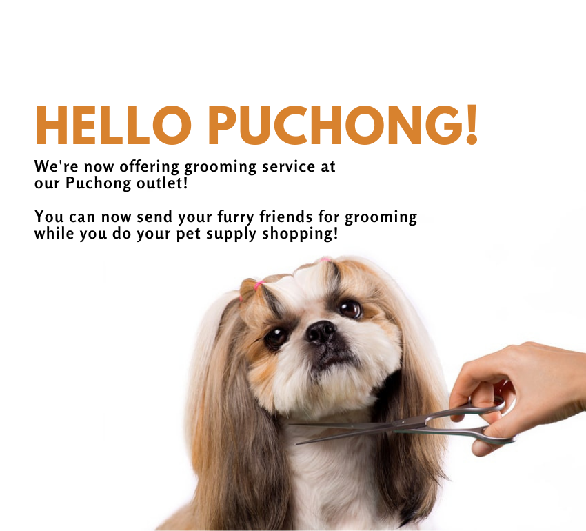 backOn15ebPuchong grooming now available